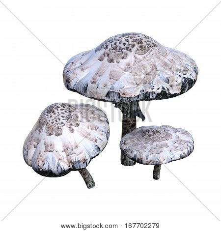 3D rendering of poisonous mushrooms isolated on white background