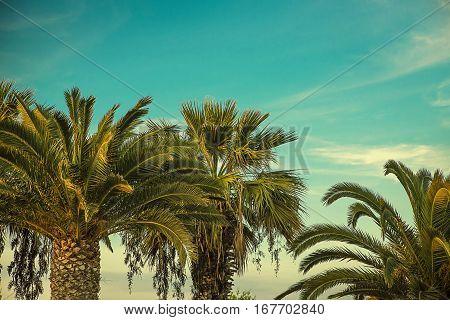 Palm trees at tropical coas retro scene
