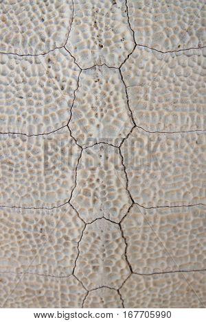 Background of the pattern on tortoiseshell skeleton
