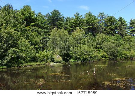 trees and river flowing through a farm in Wisconsin, USA