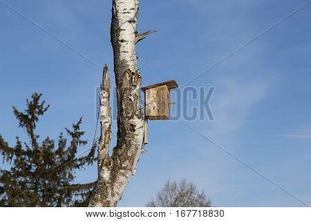 Bird box / Birdhouse hanging on the birch