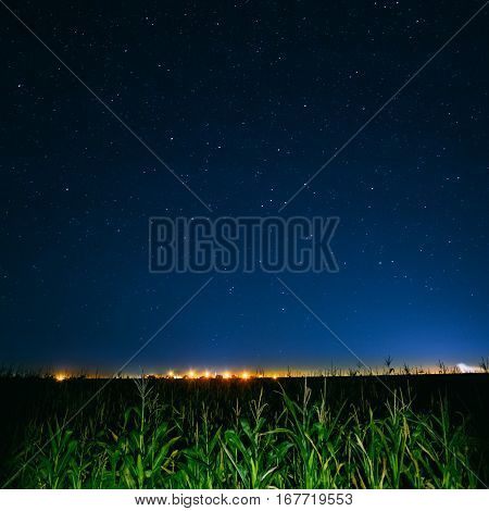Blue Night Starry Sky Above Green Cornfield And Yellow City Lights On Background. Night View Of Natural Glowing Stars