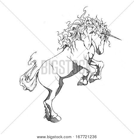 Drawing of a unicorn rearing its front legs