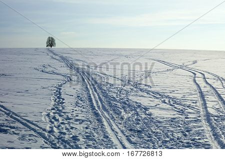 Cross-country ski tracks in the snow with a lone tree in the background.