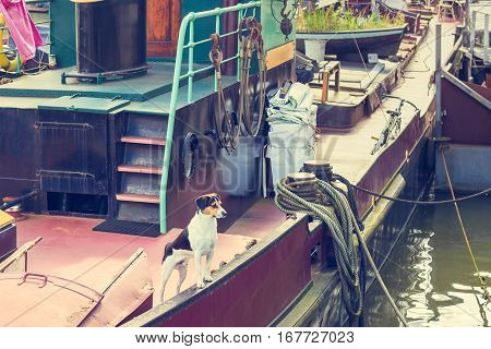 Dog on a canal boat awaiting the return of boat owner