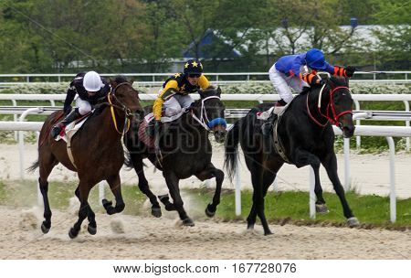 Horse race for the traditional prize Salamova in Pyatigorsk,the largest in Russia.