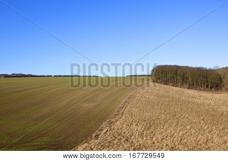 Dry Grasses And Wheat Crop