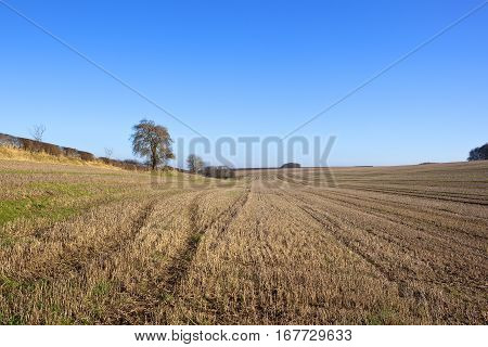 Straw Stubble And Hedgerow