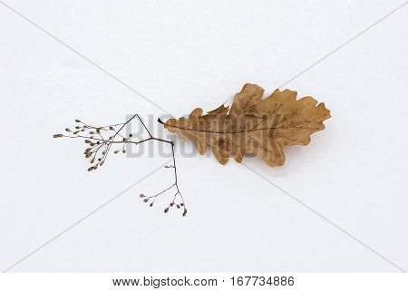 Leaf Of An Oak On Snow