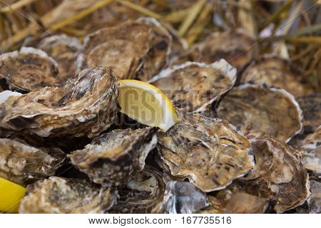 Fresh oysters in wicker basket. Seafood delicacy sale outdoors. Picnic healthy food, oysters in shells with ice and lemon slices. Mediterranean cuisine