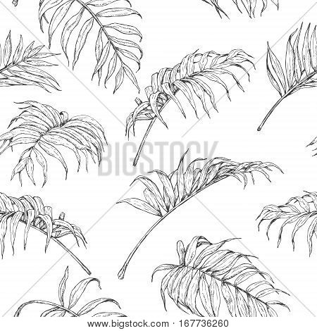 Hand drawn branches and leaves of tropical plants. Monochrome palm fronds sketch pattern. Black and white seamless texture.