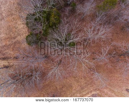 Aerial view of barren trees in a Missouri winter