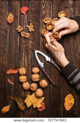 Childs hands with walnut kernels whole walnuts and autumn leaves on dark rustic old wooden table. Walnuts and nutcracker on wooden background.
