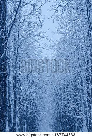 Winter in the snowy forest (in blue colors)