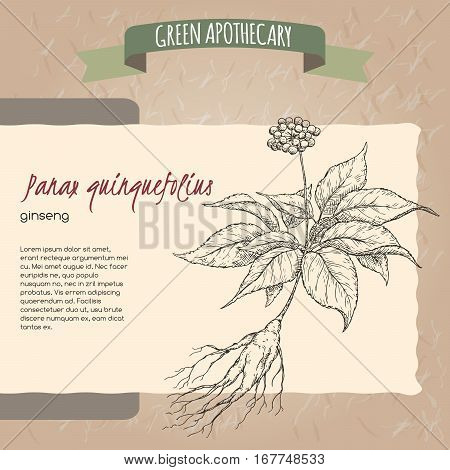 Panax quinquefolius aka ginseng hand drawn sketch. Green apothecary series. Great for traditional medicine, gardening or cooking design.