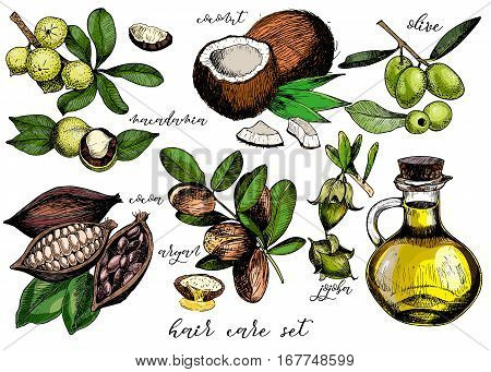 Vector set of hair care ingredients. Organic hand drawn colored elements. Olive argan coconut cocoa macadamia jojoba and oil bottle. cosmetic package shop store product spa