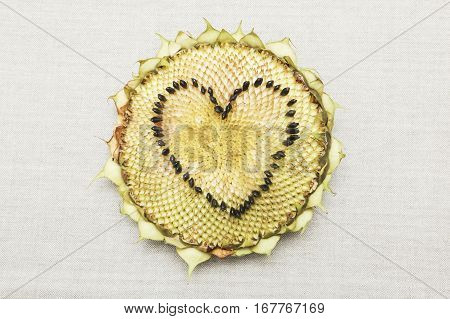 Sunflower head on a canvas material. Heart shape made from the seeds.