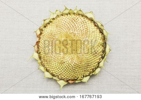 Empty sunflower head on a canvas material. No seeds inside.