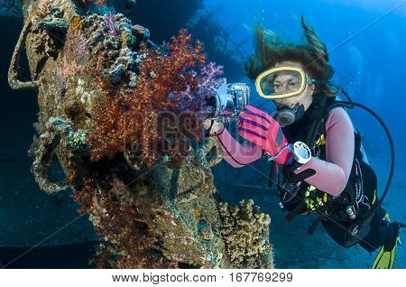 Woman underwater photographer taking images of soft corals of Giannis D shipwreck at Abu Nuhas Reef, Red Sea, Egypt.
