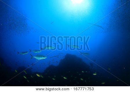 Ocean reef and fish underwater