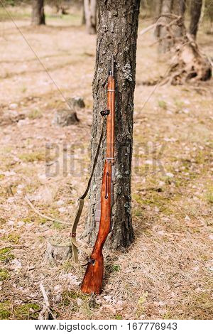 Old soviet russian rifle of World War II leaning against trunk of tree. Weapon of Red Army.