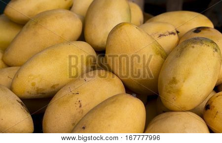 Yellow mango pile. Fresh juicy mango background. Tasty fruit for juice and dessert. Sweet exotic fruit from tropical garden. Mango closeup photo for cooking recipe. Tropical plant fruit ready to eat