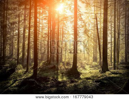 Beautiful forest view at morning. Sun peeps out through the trees with long shadows on the green grass.