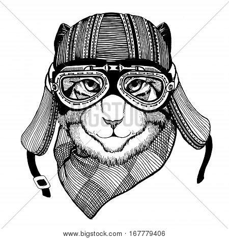 Wild cat Wild cat The cat wears a motorcycle helmet Hand drawn image