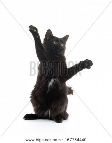 Black Cat Swinging Its Paws