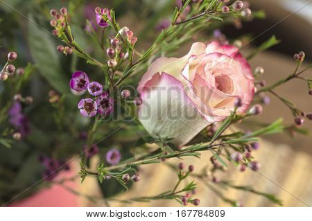 Bouquet of white and pink Roses and Waxflower for a holiday gift