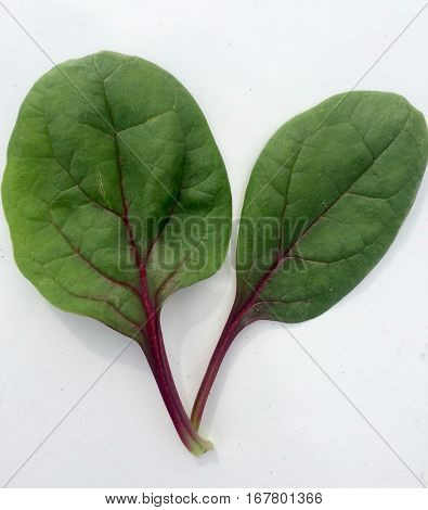 Upclose detail of fresh red spinach leaves