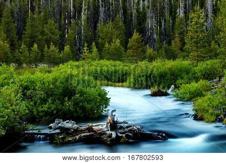 Fall Creek in Central Oregon flows through the forests in the Cascade Mountains with a nice evening glow.