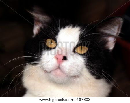 Cat, Feline, Black Cat