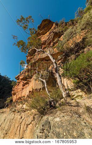 Eucalyptus Tree Growing On Rough Rocky Surface