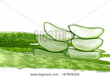 Sliced Aloe Vera (Aloe barbadensis Mill.Star cactus Aloe Aloin Jafferabad or Barbados) a very useful herbal medicine for skin care and hair care.