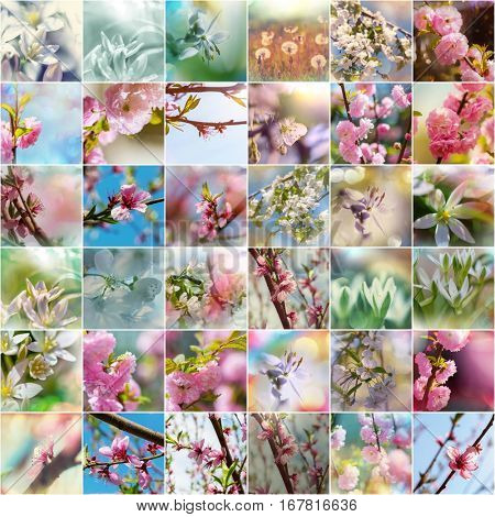 Spring garden collage,blossoming tree and flowers set.