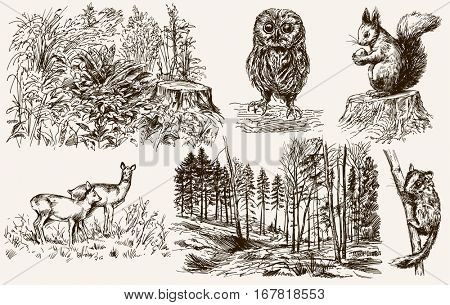 Forest nook. Wild animals. Hand drawn set