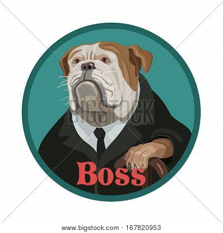 The dog is a Bulldog like the boss strictly looks like the head of a subordinate with highly rank the wise and careful