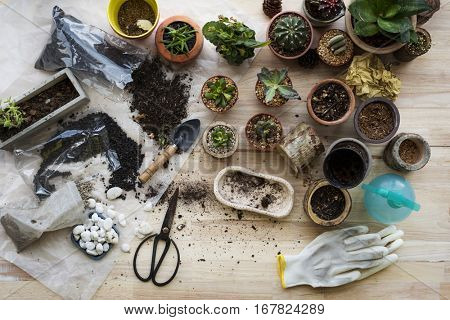 Planting Plants Cactus Soil Stones On A Wooden Table