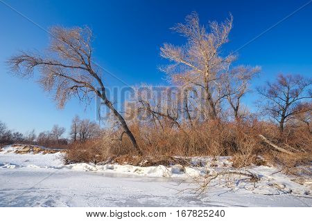 Winter landscape with frozen lake and trees. Composition of nature.