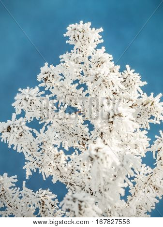 Frosted plant against blue sky