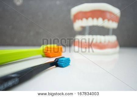 Toothbrushes with upper and lower jaw dental model in the background. Proper cleaning dental hygiene education and prevention concept and background.