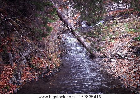 Mountain stream with overturn tree in forest