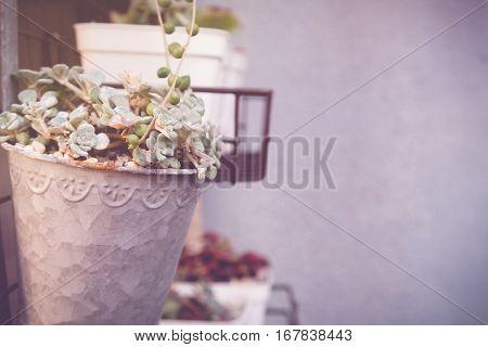 agave succulent plant pots selective focus toning copy space background