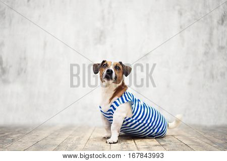Small dog in uniform