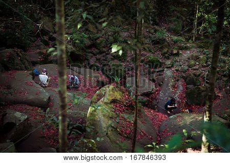 Loei / Thailand - Dec 2016:maple Leaf Fell On Rocks On The Phu Kradueng National Park, Loei,thailand