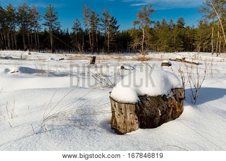 winter landscape with wooden stub under snow