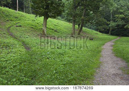 Two different paths through the hill in the forest. Choose the tiny path or the wide one. Green field with oak trees.