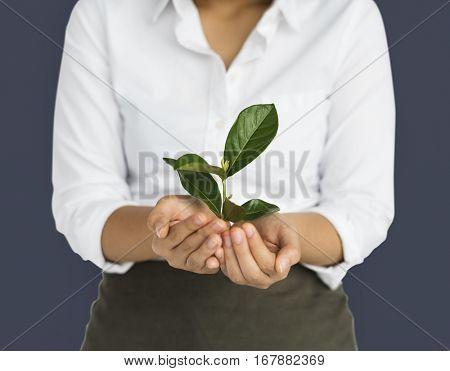 Business Attire Female Holding Seedling
