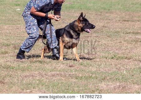 Soldiers from the K-9 dog unit works with his partner to during a demonstration Training